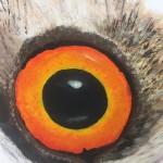 Augen_Wer-guckt-da-so