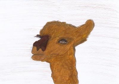 Tiere aus Peru (Lama)