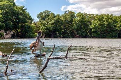 venezuela-mangroven2